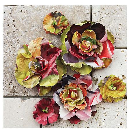 Prima gallery roses